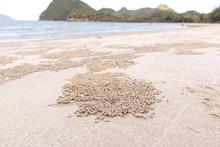 Crab's Hole On The Beach Floor...