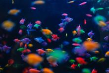 Colorful Fish Variety In Aquar...
