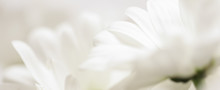 Abstract Floral Background, Wh...