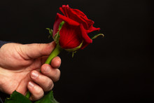 Red Rose In A Man's Hand On A ...
