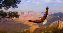 Eagle Over Grand Canyon USA