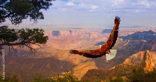 Stampa su Tela Eagle over Grand Canyon USA
