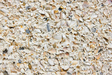 Sea Shell Wall Background