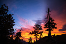 A Vibrant Sunrise Over Pine Tr...