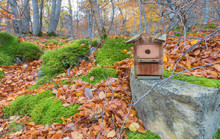 An Abandoned Wooden Birdcage On A Grey Stone In The Forest In A Dark Day Of Autumn With Many Yellow Leaves On The Ground, Moss On The Stones And Few Leaves In The Trees. Horizontal Photo.