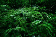 Tropical Fern Bushes Backgroun...