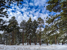 Treeline With Snow At Mount San Jacinto
