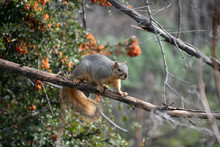 A Squirrel Climbing On A Branc...