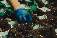 Cultivate Marijuana Cannabis