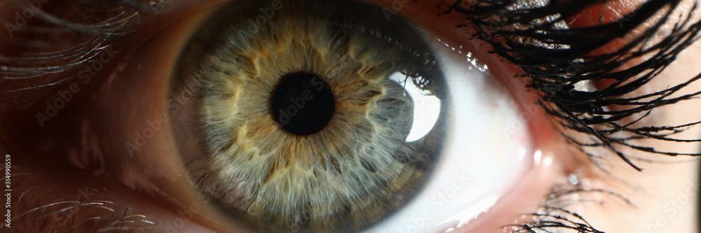 Fototapeta Human green eye supermacro closeup background. Check vision concept