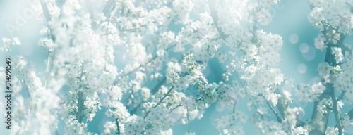 Tapety Botaniczne  bialy-kwiat