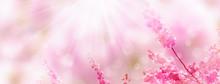 Kirschblüten Vor Abstraktem H...