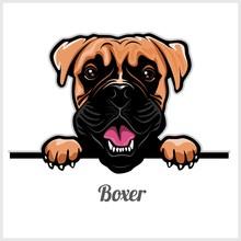 Boxer - Peeking Dogs - Breed F...
