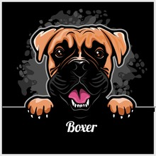 Boxer - Peeking Dogs - Breed Face Head Isolated On Black