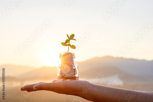 Fototapeta Human hands holding plant growing from coins in the glass jar on blurred green natural background with sun light effect and copy space for business and financial growth concept obraz