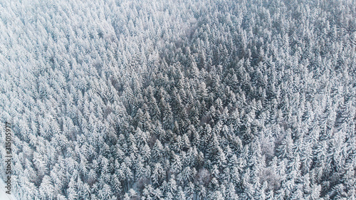 Obraz Abstract Winter Wonderland. Pine Trees Snow Covered. Aerial Drone view - fototapety do salonu
