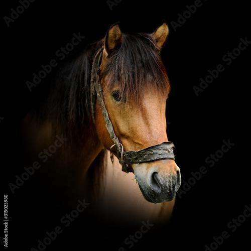 Horse on dark background Tablou Canvas