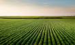 Leinwandbild Motiv Open soybean field at sunset.