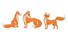 Red Fox In Different Poses Vec...