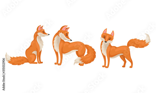 Red fox in Different Poses Vector Illustrations Set Canvas Print