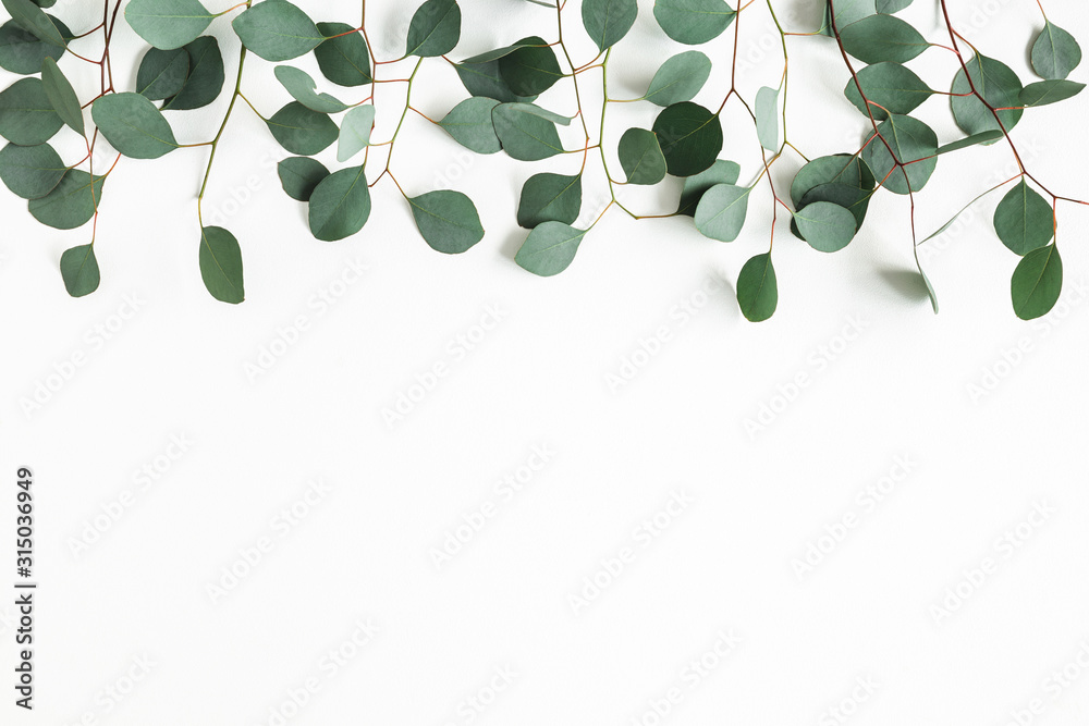Fototapeta Eucalyptus leaves on white background. Border made of eucalyptus branches. Flat lay, top view, copy space