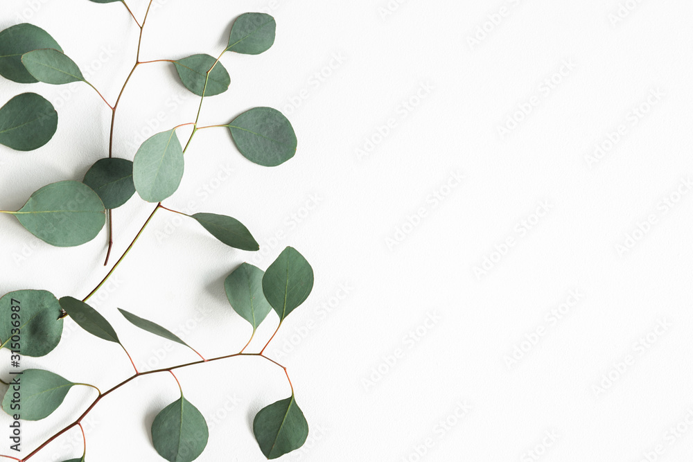 Fototapeta Eucalyptus leaves on white background. Frame made of eucalyptus branches. Flat lay, top view, copy space