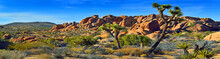 Joshua Tree National Park In C...