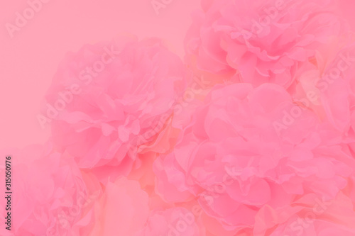 Beautiful abstract color white and pink flowers on white background and white flower frame and orange leaves background texture, flowers banner, pink background, colorful white banner happy valentine - 315050976
