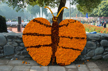 A Butterfly Made Of Marigold F...