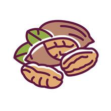 Pecan Nut Color Line Icon. Nut...