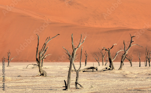 Dead Vlei landscape with dry acacia in Namib desert, valley Sossusvlei, Namibia Canvas Print