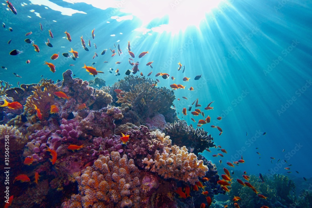 Fototapeta Life-giving sunlight underwater. Sun beams shinning underwater on the tropical coral reef.Ecosystem and environment conservation