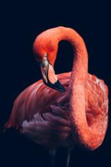 Close-up of pink flamingo bird