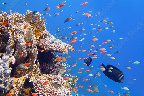 Piękna tropikalna rafa koralowa z ławicą lub rybą koralową