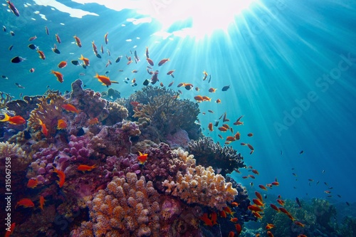 fototapeta na ścianę Life-giving sunlight underwater. Sun beams shinning underwater on the tropical coral reef.Ecosystem and environment conservation
