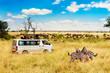 canvas print picture - Safari concept. Zebra couple with safari car in african savannah. Masai Mara national park, Kenya.