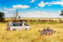 Safari Concept. Zebra Couple With Safari Car In African Savannah. Masai Mara National Park, Kenya.