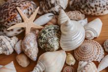 Many Different Seashells Piled...