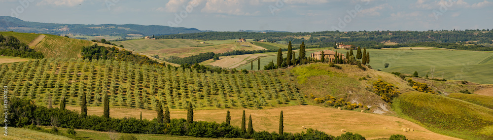 Fototapeta Tuscany - Landscape panorama, hills and meadow, Toscana - Italy
