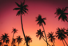 Tropical Palm Tree On Sunset S...