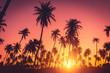 Leinwandbild Motiv Tropical palm tree on sunset sky cloud abstract background.