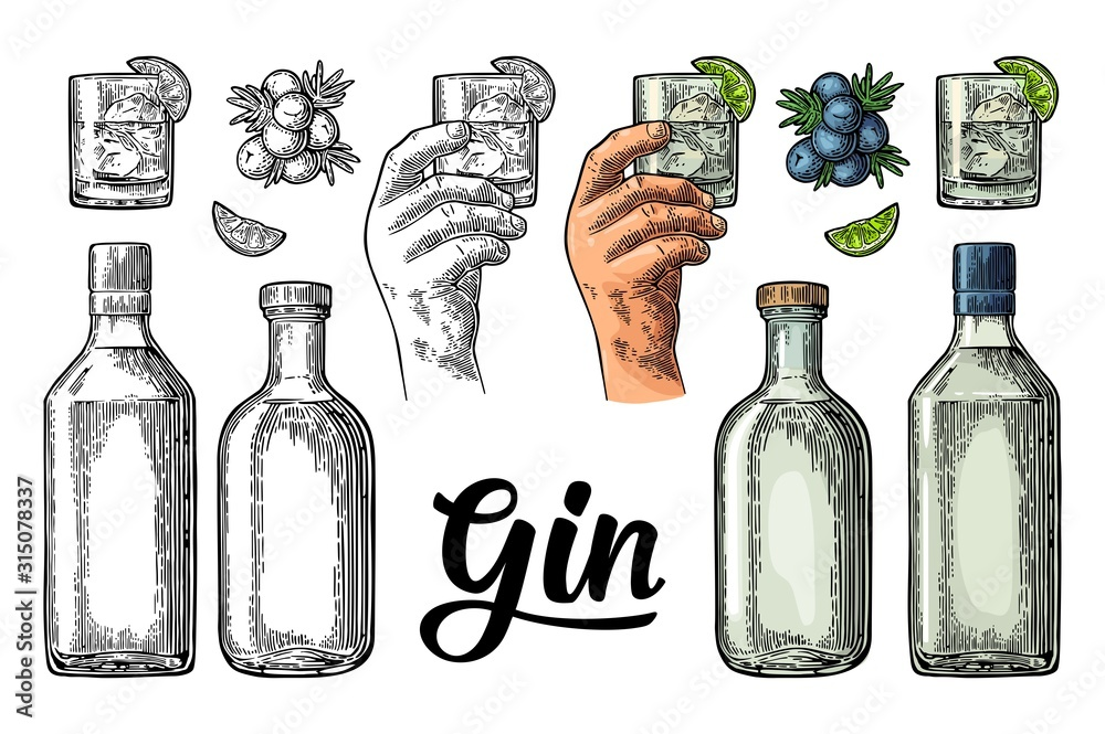 Fototapeta Glass and bottle gin and branch juniper. Vintage vector color engraving