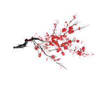 Realistic Sakura Blossom - Japanese Cherry Tree Isolated On White Background - Vector
