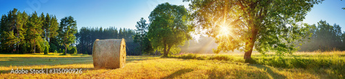 Obraz Tree foliage in morning light - fototapety do salonu