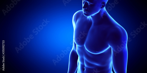 3d rendered medically accurate illustration of the male upper body Wallpaper Mural