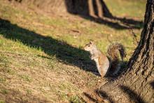 Un écureuil A Central Park