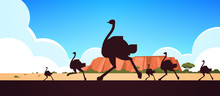 Silhouette Of Running Wild Animals Ostriches Australian Landscape Nature Of Australia Wildlife Fauna Concept Horizontal Vector Illustration