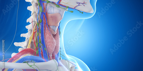 Fotomural 3d rendered medically accurate illustration of the throat anatomy