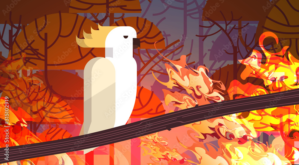 Fototapeta cockatoo sitting on branch forest fires in australia animal dying in wildfire bushfire burning trees natural disaster concept intense orange flames horizontal vector illustration