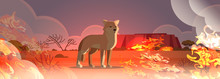 Dingo Escaping From Fires In A...